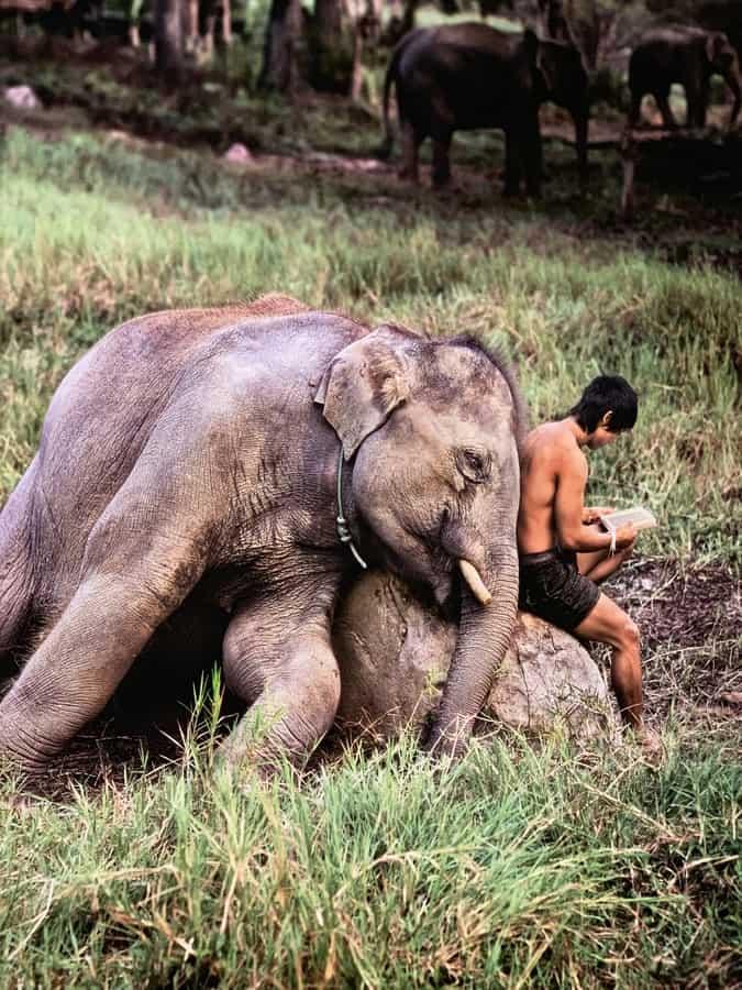 """Steve McCurry e la sua """"ANIMALS"""" al Mudec di Milano"""