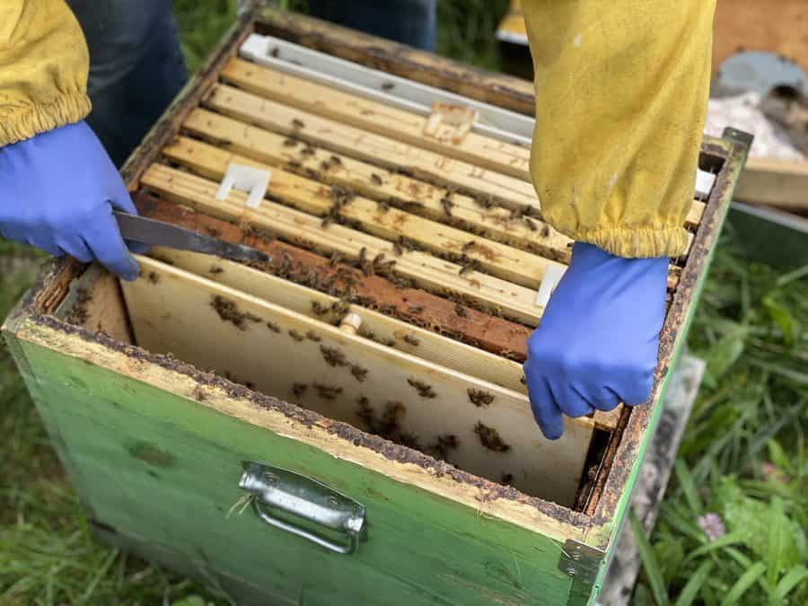 Con i ragazzi del Parco Adamello Brenta tra le api: che esperienza!